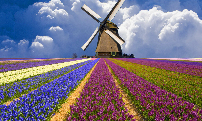 Kết quả hình ảnh cho cối xay gió Zaanse Schans